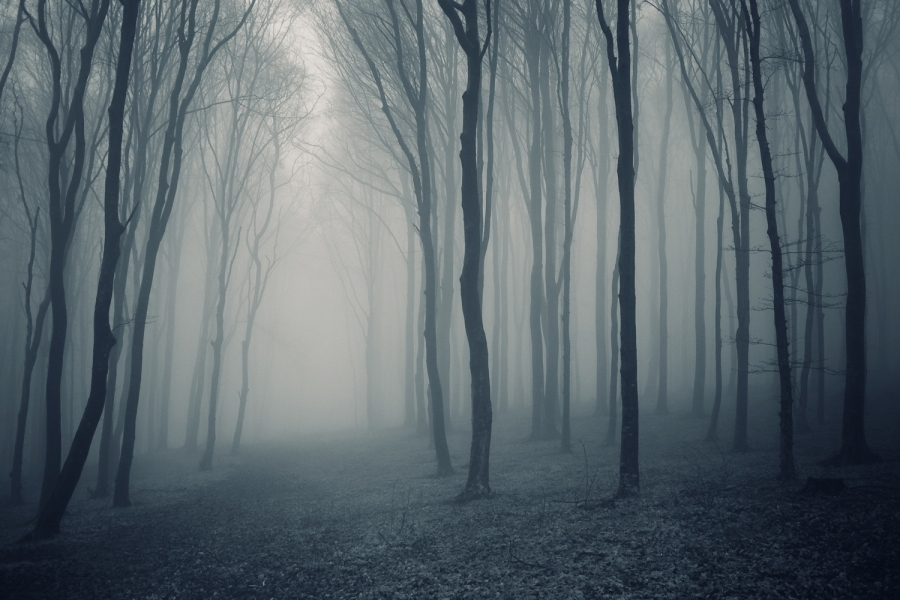 Grey-mist-forest-mural-wallpaper_large