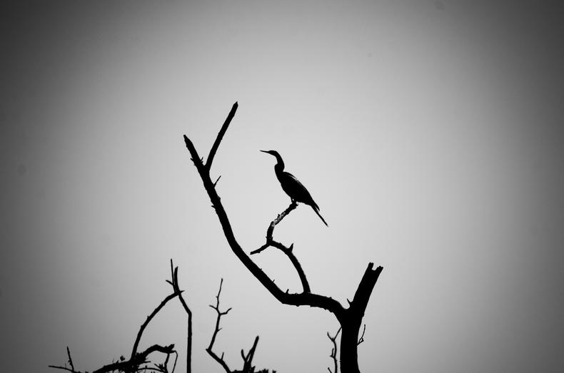 Silhouette bird