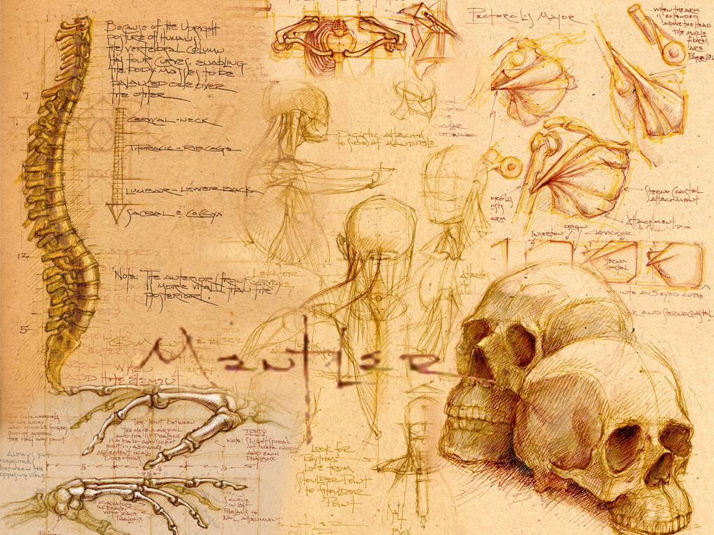 Skulls_sketches_skeletons_drawings_desktop_1024x768_hd-wallpaper-1015286_large