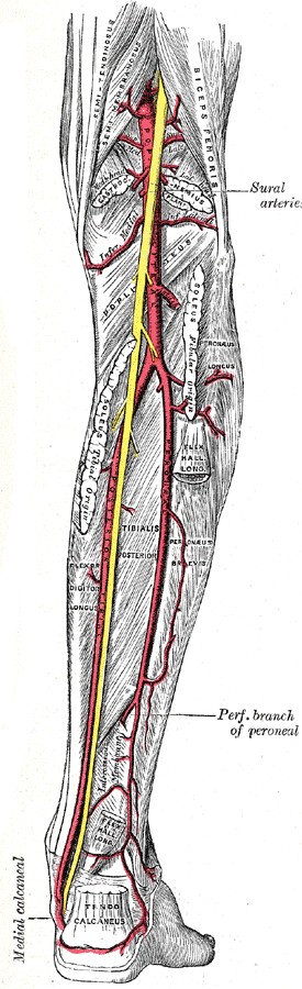A Little More On The Tibialis Posterior