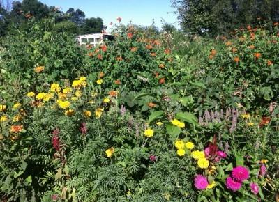 Exuberant%20flowers_large