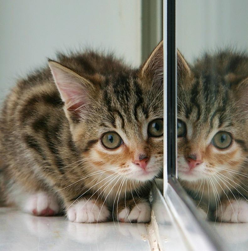 Cat/mirror