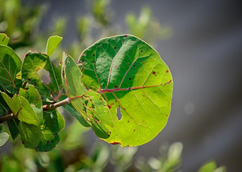 Vignetted Leaf