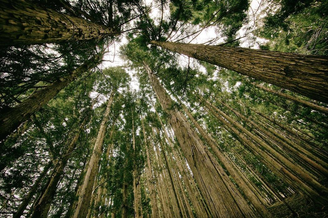Y1hedioeroya666xcjyg_forest_large