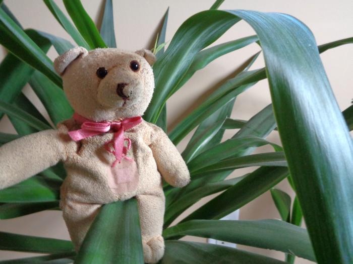 Ribbon Bear in plant