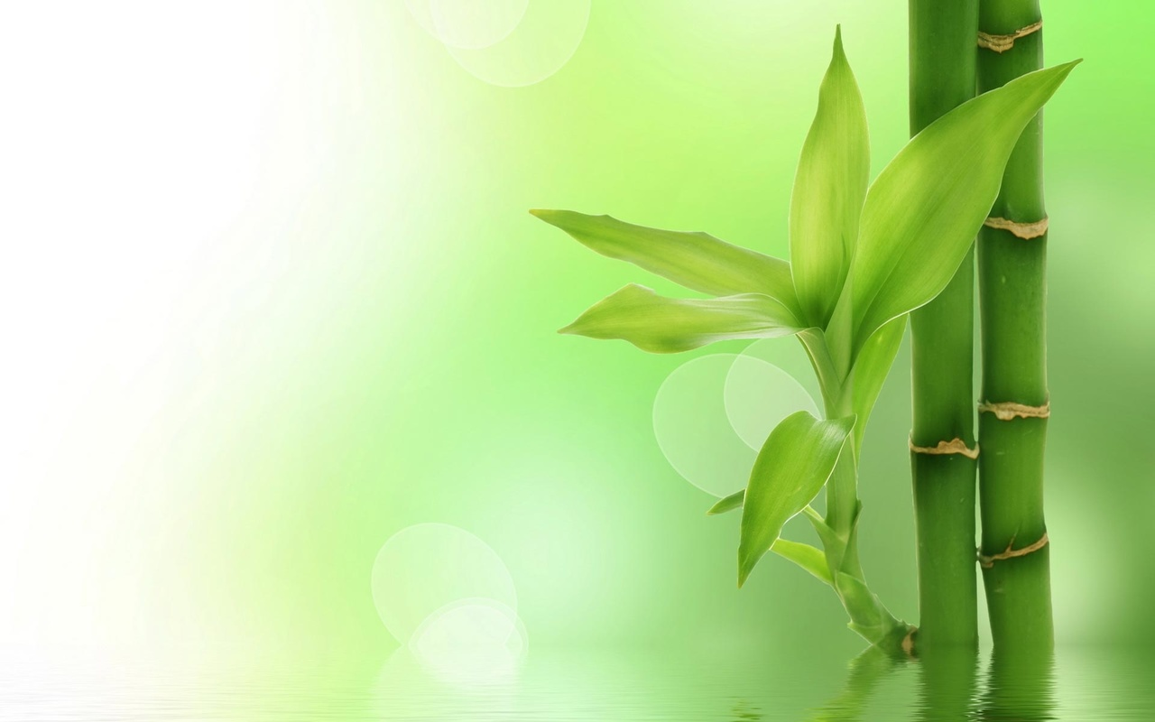 744804-bamboo-wallpaper_large